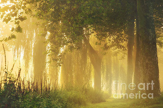 Magical light by LHJB Photography