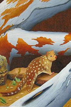 Magnificent Tasmanian spoted Quoll by Brian Leverton