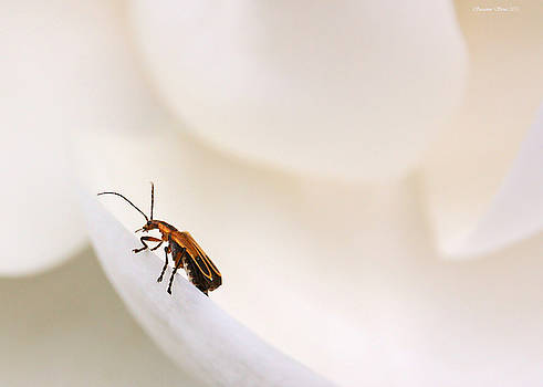 Magnolia Blossom Visitor by Suzanne Stout