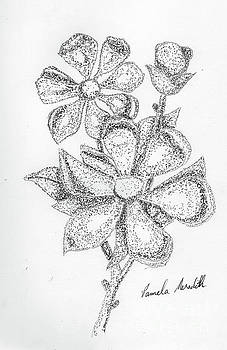 Magnolia by Pamela Meredith