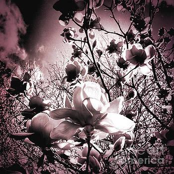 Magnolia Pink by Karen Lewis