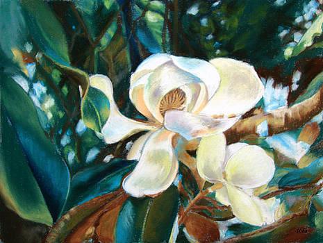 Magnolia by Usha P