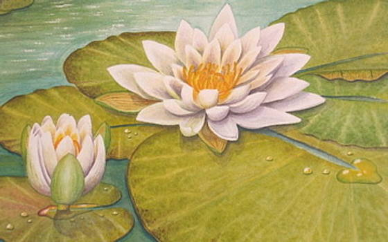 Magnolia waterlily by Elizabeth H Tudor