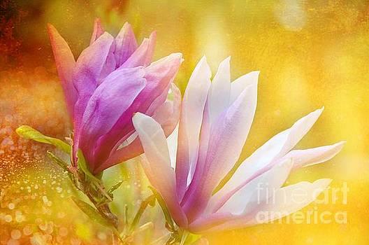 Magnolias by Elaine Manley