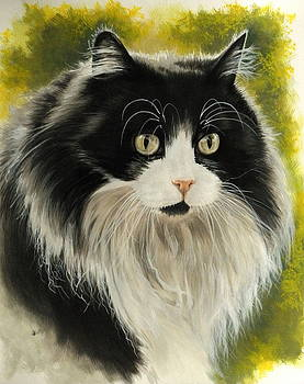 Maine Coon by Barbara Keith