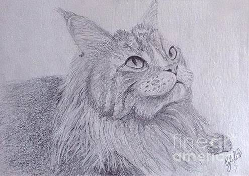 Osiris the maine coon cat by Cybele Chaves