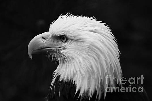 Majestic Eagle by Deniece Platt