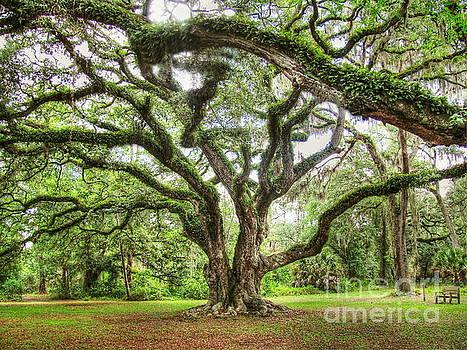 Majestic Oak by Myrna Bradshaw