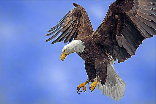 Majestic Power by Pam Mullins