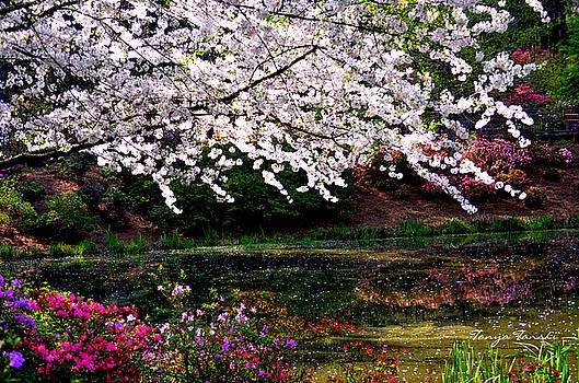 Majesty Garden.... by Tanya Tanski