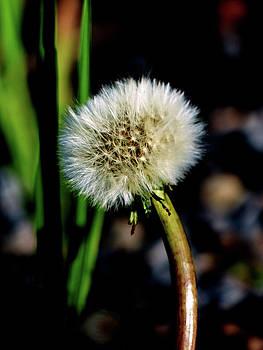 Make A Wish by Marcia Socolik