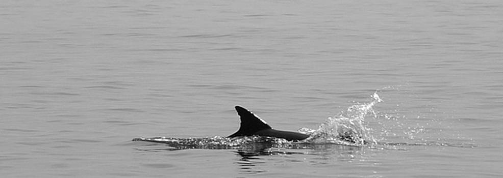 Making a Splash by Laurie Pike