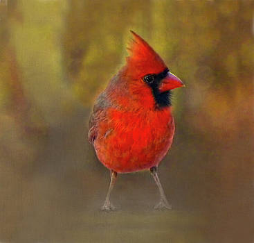 Male Cardinal in Fall by Sandi OReilly