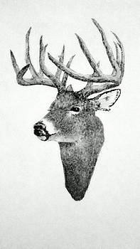 Male Deer - Black and White by Michael Vigliotti