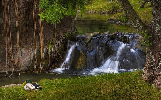 Male Mallard by the falls by Tito Santiago
