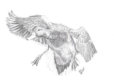 Mallard Duck by Joann Renner