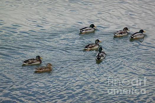 Mallard Ducks In Pond 2 by Jean Bernard Roussilhe