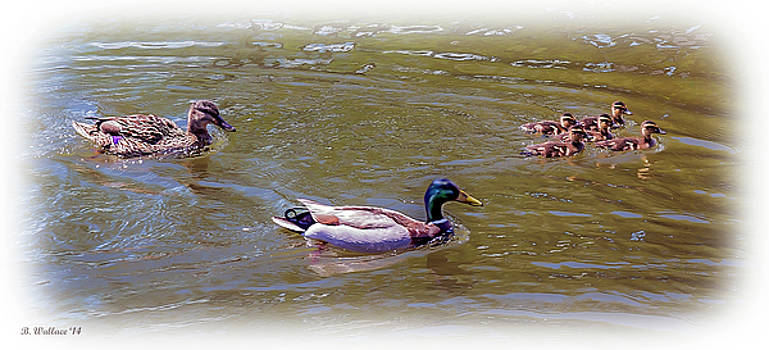 Mallard Family Outing by Brian Wallace
