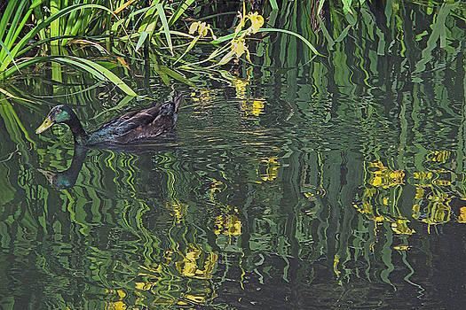 Mallard in the Marsh by Suzy Piatt