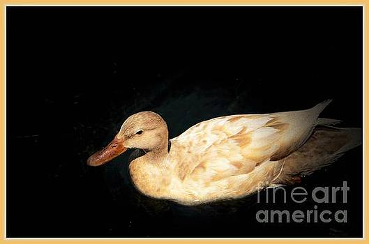 Mallard of a Different Color by Pamela Blizzard