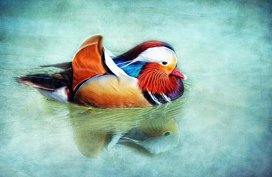 Mandarin Duck by Claudia Moeckel