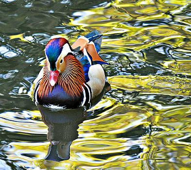 Mandarin on Golden Pond by Bev Brown