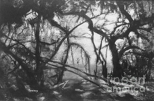 Mangroves by Moonlight by Mary Lynne Powers