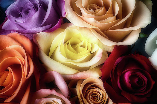 Many Colorful Roses by Garry Gay