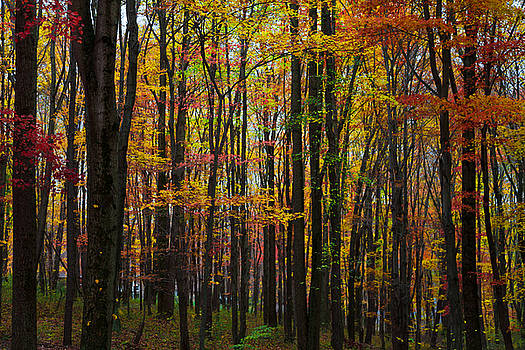 Many Colors of Autumn by April Reppucci