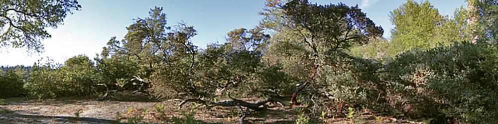 Manzanita and Oaks by Larry Darnell