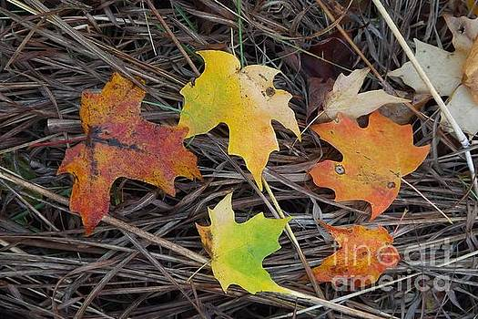 Maple leafs by Gerald Strine