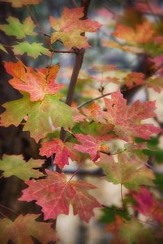 Saija  Lehtonen - Maple Leaves