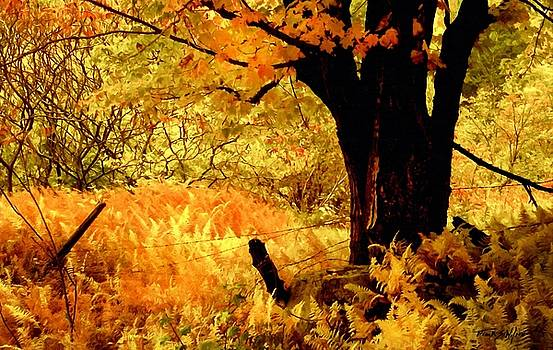 Maples Ferns and Barbed Wire by Frank Wilson