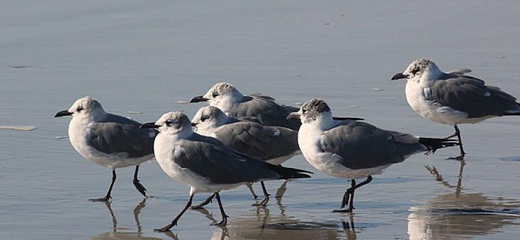 Rosanne Jordan - Marching Gulls