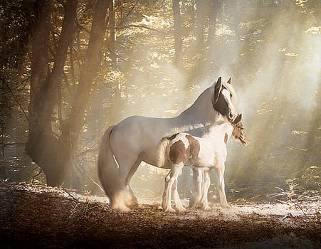 Mare and Foal II by Jamie Mammano