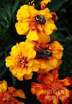 Marigold Cluster by J L Zarek