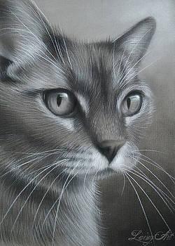 Marilly's Cat by Alaina Ferguson