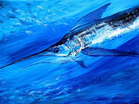 Marlin, Feeding by J Vincent Scarpace