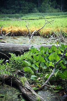 Marsh by Jeannie Burleson