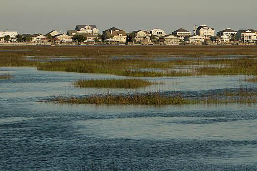 Marsh Life by Deborah Flowers