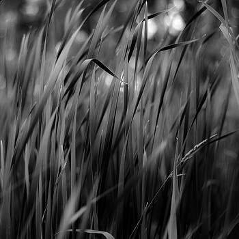 Marshland Grasses 009 by Noah Weiner