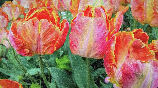 Marthas Vineyard Tulips by David Millenheft