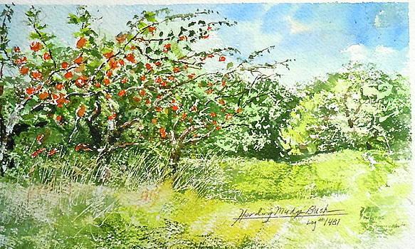 Maryjane's Orchard by Harding Bush