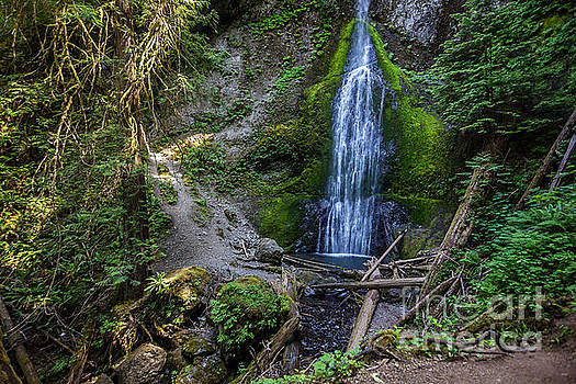 Marymere Falls Olympic National Park by Joan McCool