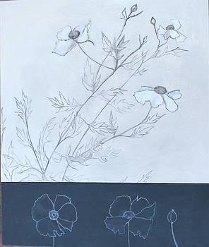Matilija Poppy by Genevieve Smith