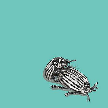Mating Beetles by Jude Labuszewski