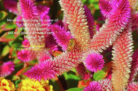 Matthew 5 5 Flower by Mark Olshefski
