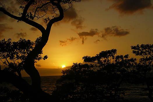 Maui Sunset by David Ignaszewski