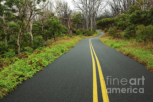 Mauna Loa Road - Hawaii by Charmian Vistaunet