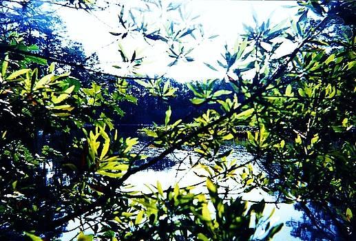 Maury Lake in Newport News VA by Anne-elizabeth Whiteway